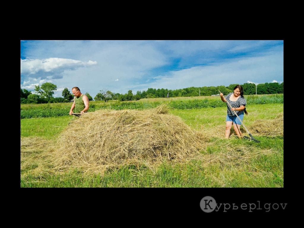 В КФХ «Маковей» заготовка кормов в самом разгаре. Самую тяжелую работу выполняет глава семьи. Впрочем, и Оюна с волонтерами на отстает
