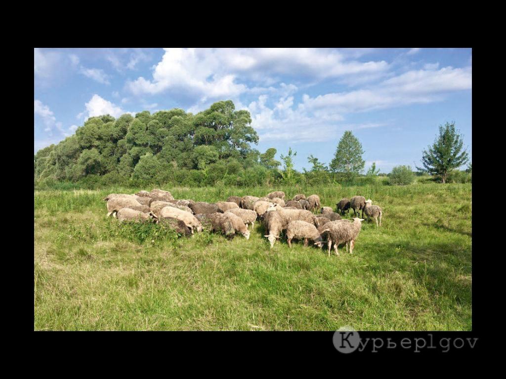 В первый год своего хозяйствования супруги приобрели 10 овец романовской породы. К дню сегодняшнему отара выросла до 54-х голов